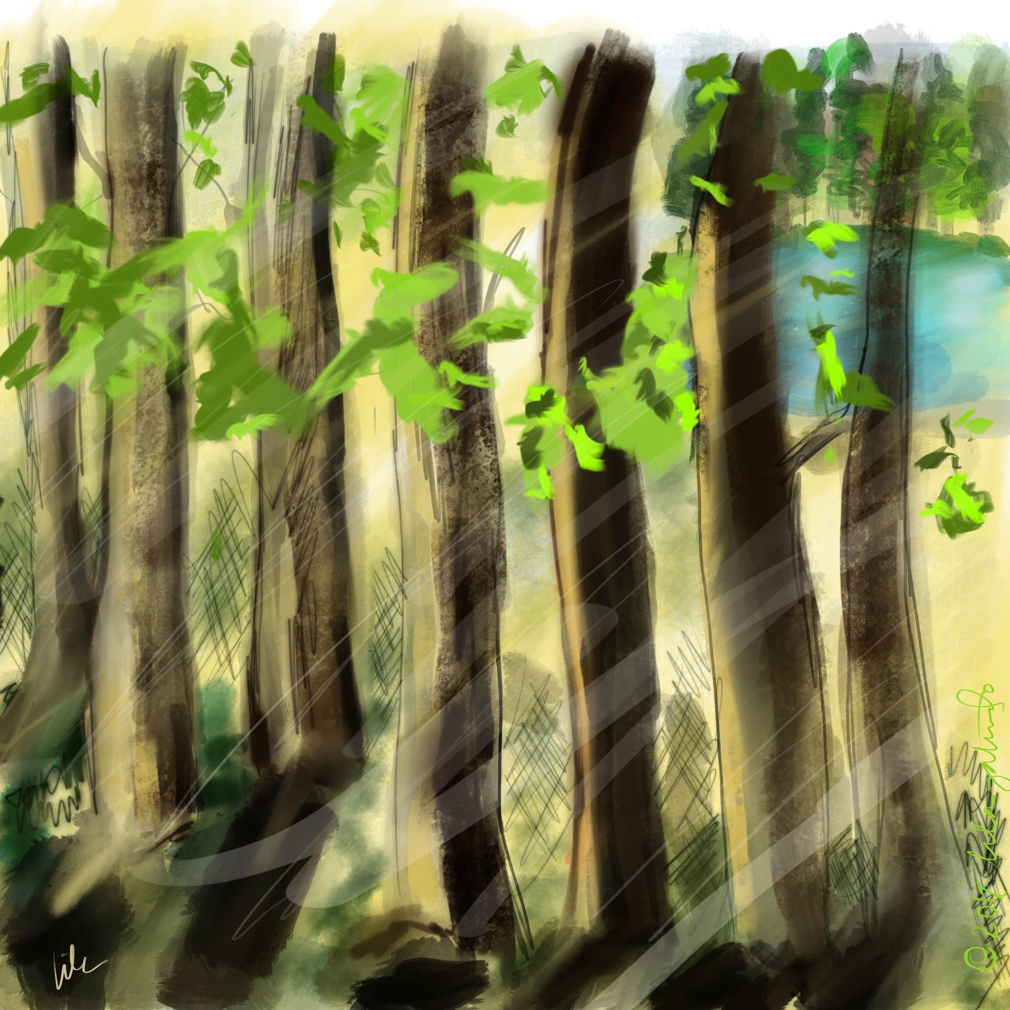 interlochen-trees.jpg