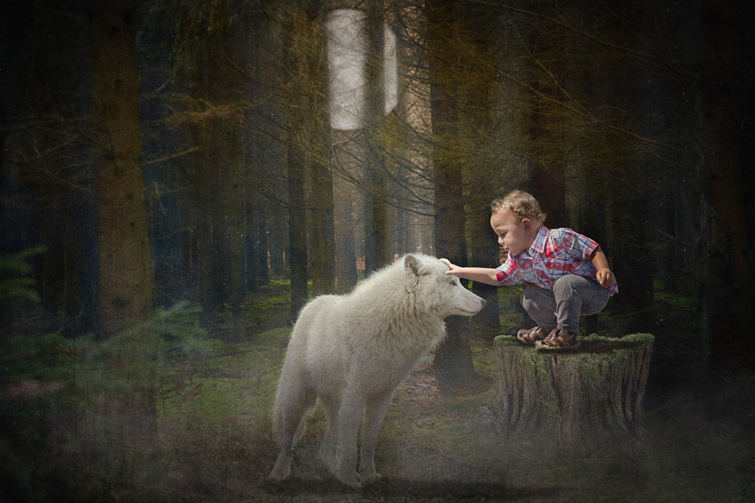 great white wolf being tamed by little boy storybook composite