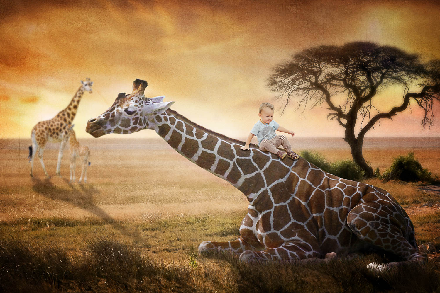 Little boy sliding on giraffe on safari storybook composite