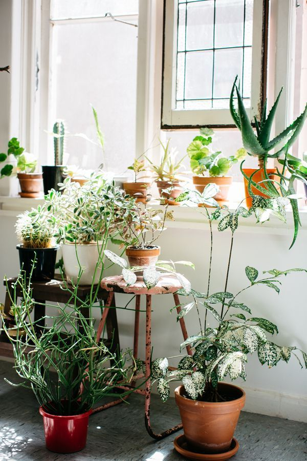 potted-plants-by-white-wall-windows-natural-light.jpg
