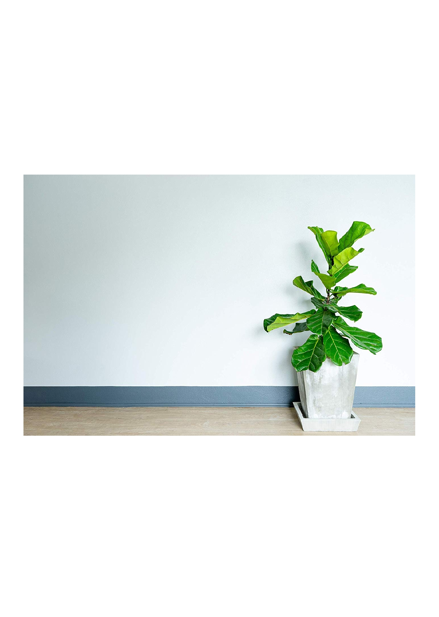 FIDDLE LEAF FIG TREES - SHOP FIDDLE LEAF FIG TREE ACCESSORIES