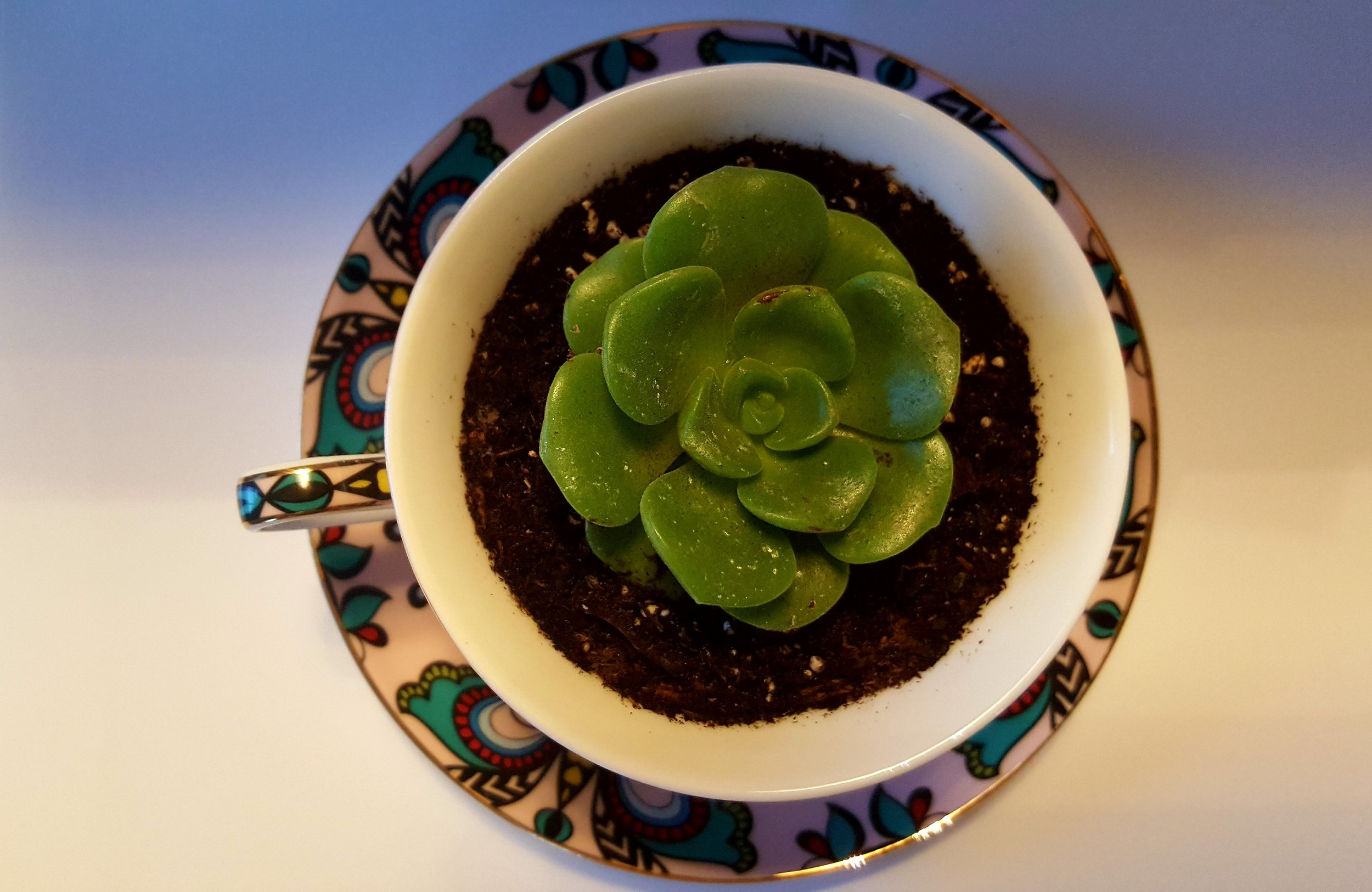 TEACUPS & SUCCULENTS - FOR THE OFFICE OR A SPECIAL GIFT FOR A SPECIAL SOMEONE