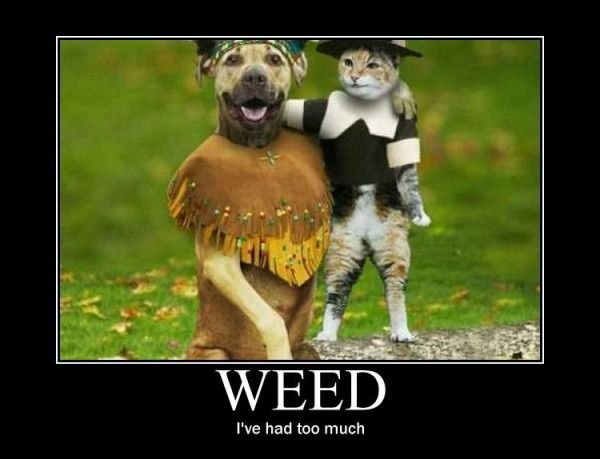 weed-ive-had-too-much