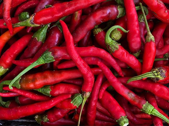 Did you know that cayenne peppers are the hottest when they mature to red? They even have numerous health benefits!