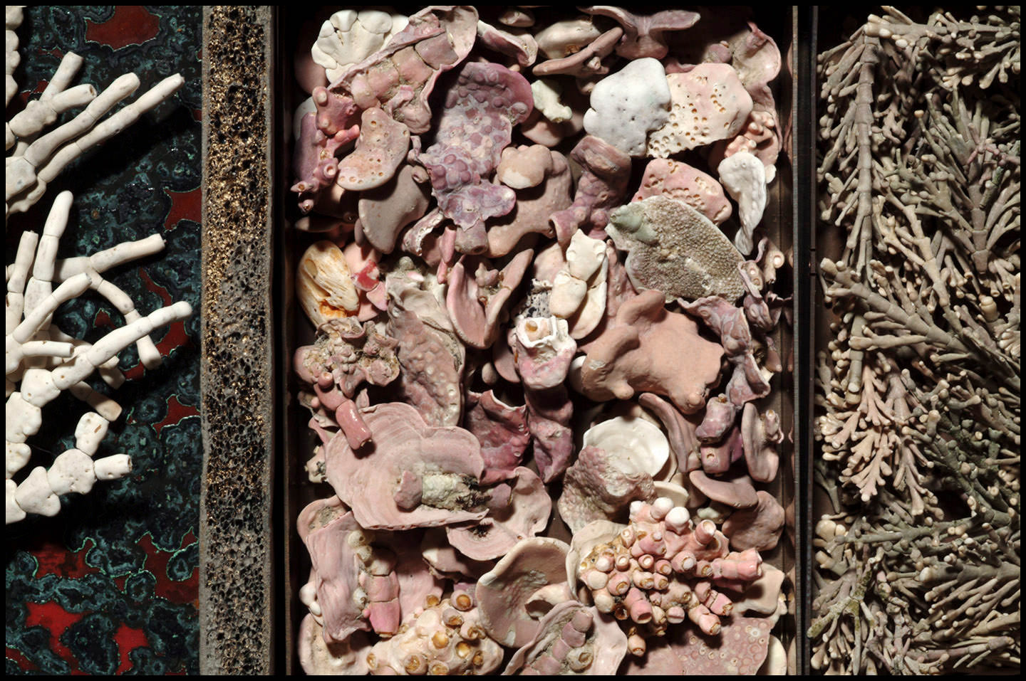 Various species and growth stages of Coralline algae. The larger pieces are what adheres to a substrate.