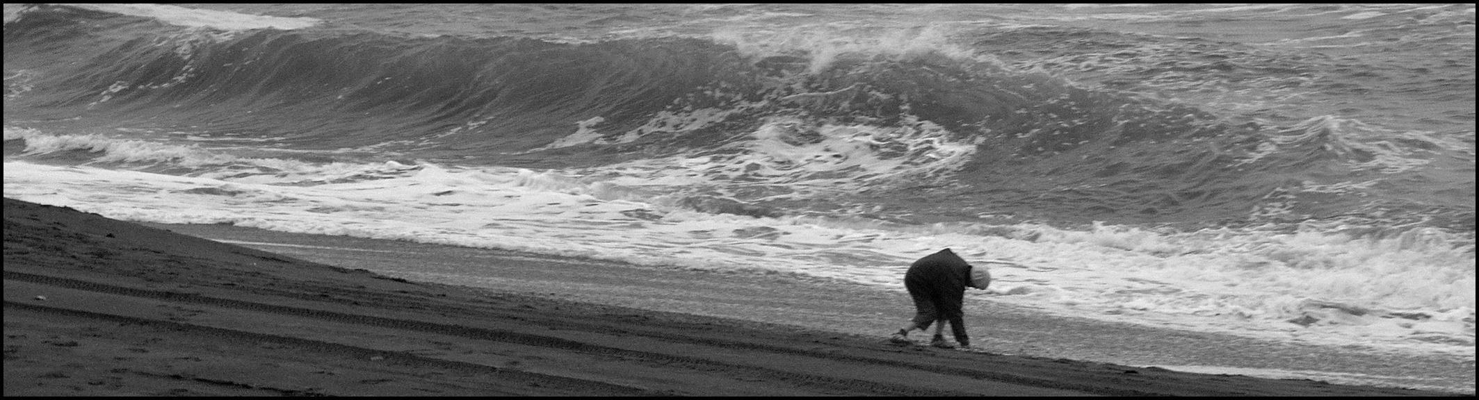 Tolowa-Beachcomber.jpg