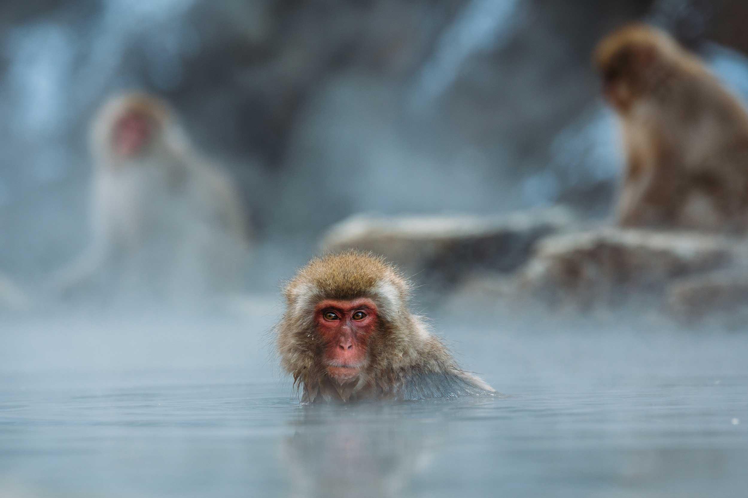 Japan-bath-monkey.jpg