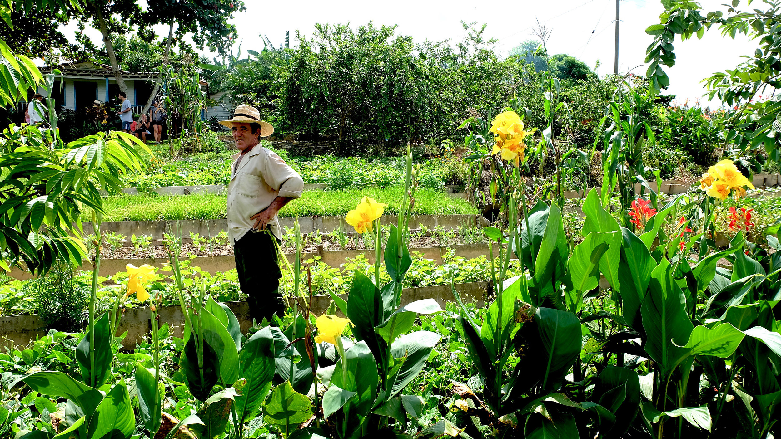 Cuba-Farm-Man.jpg