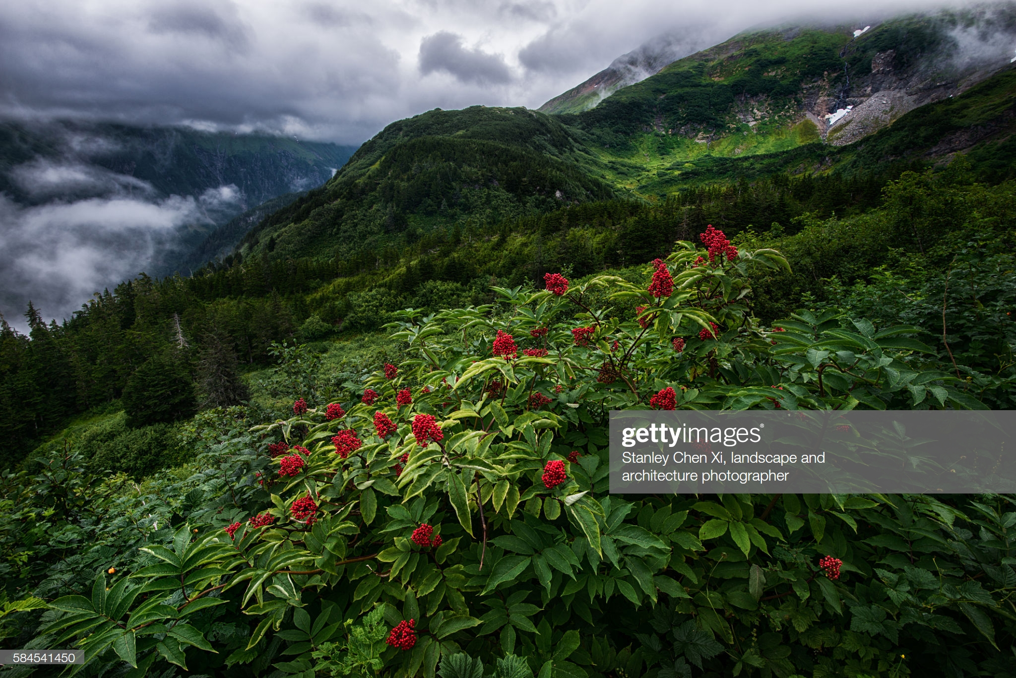 gettyimages-584541450-2048x2048.jpg