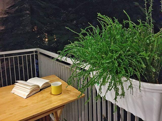 What better way to spend a Saturday night? Book and tea on the balcony garden 📙🍵 Credit: @minmeowww . . . . . #gallopapartments #airbnbhomes #airbnblife #gallopapartmentsd2 #airbnboftheday #airbnbguide #bookandtea #saturdaynight #saigonatheart #hochiminhcitysaigon #saigontravel #expatinsaigon