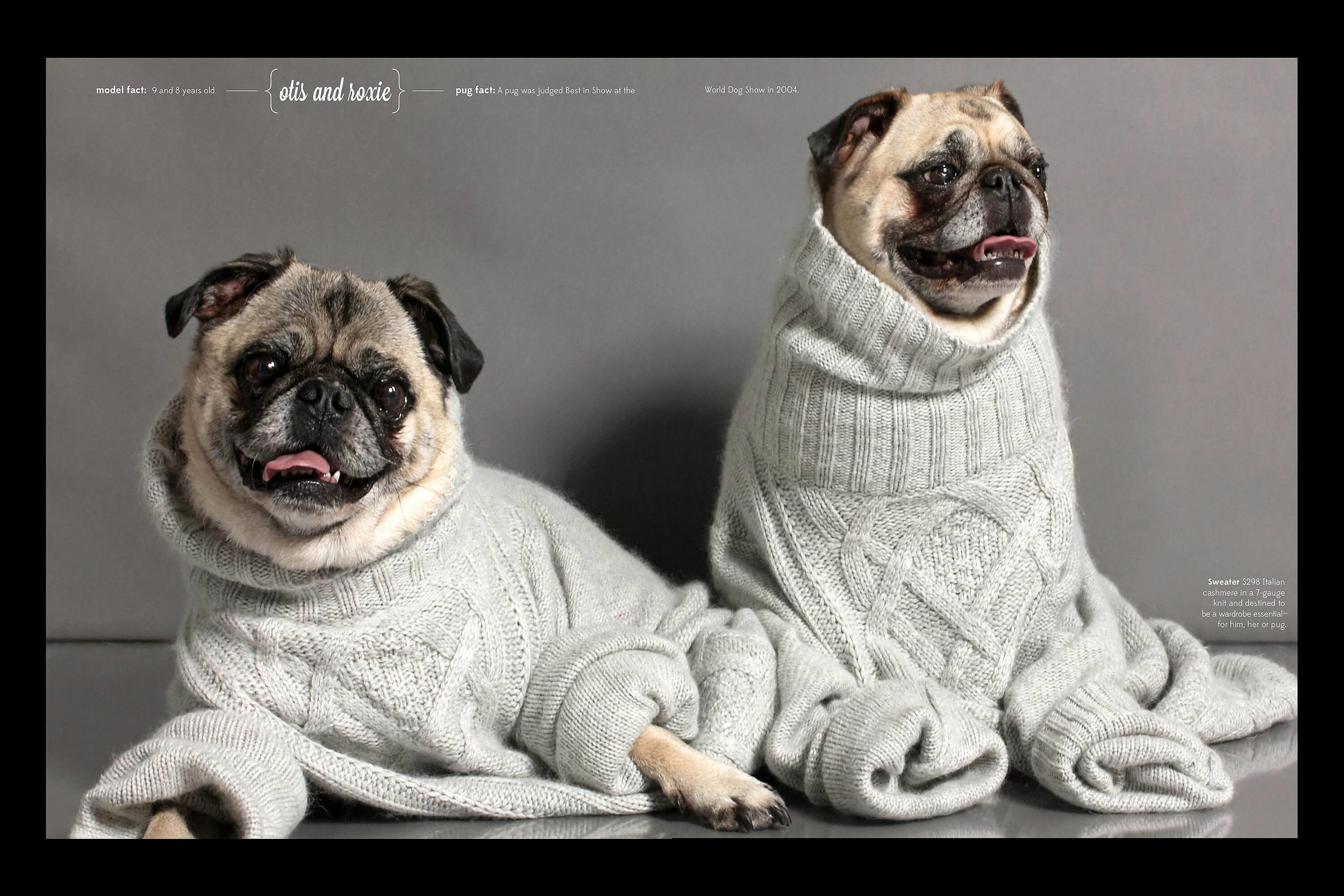 JCrew_sweaters_pugs_commercial_photography.jpg