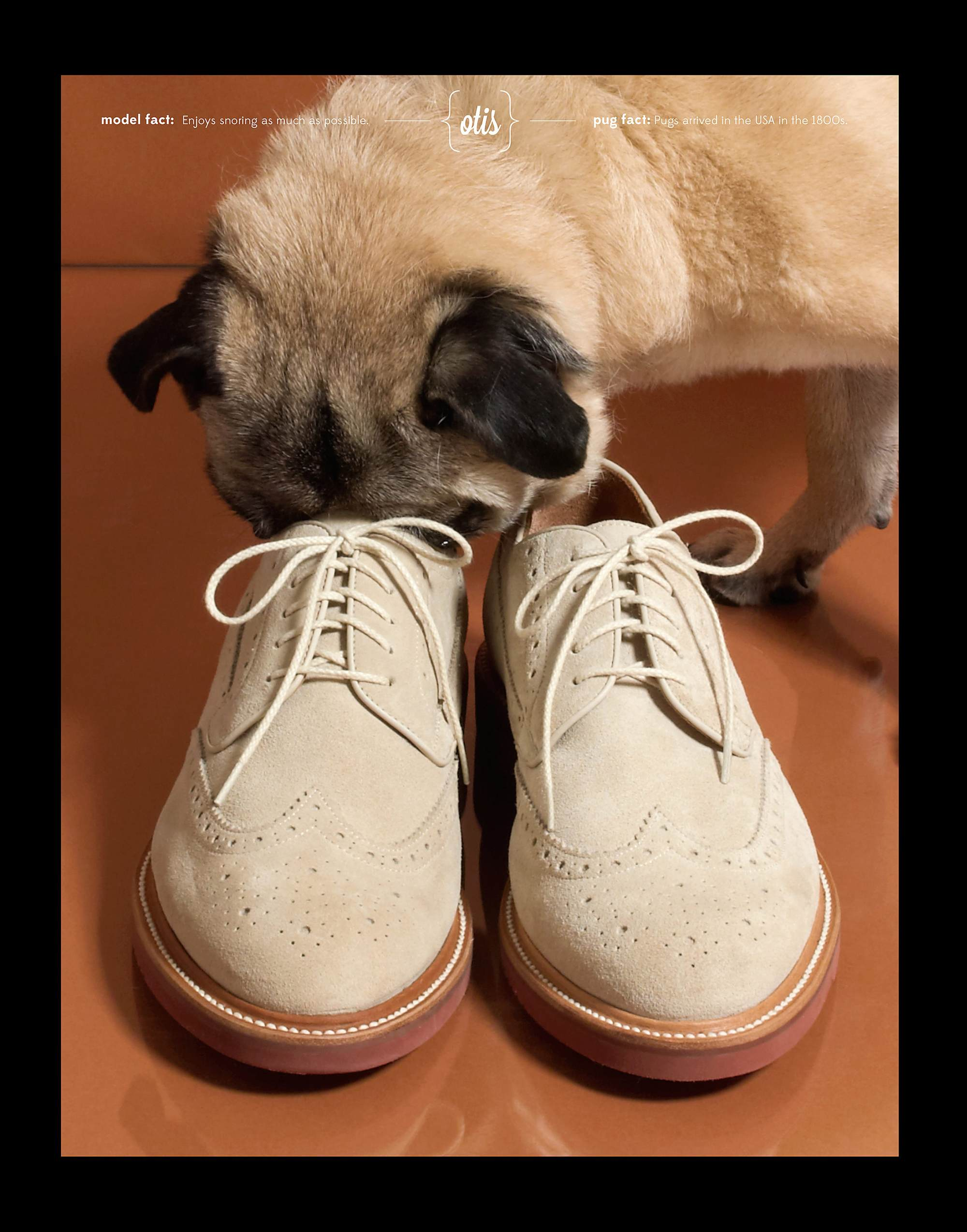 Jcrew_product_photography_shoes_pug.jpg