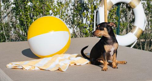 capri-dog.jpg