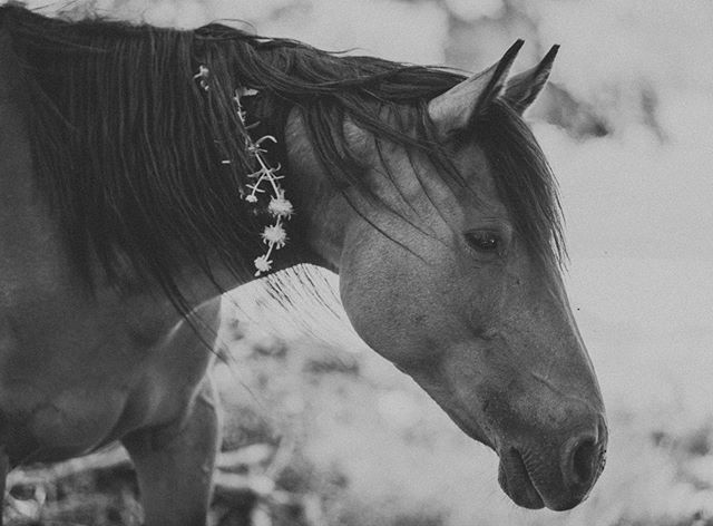 """Athena 🌿🌕 Sometimes it hits me... and I am so blown away by this mare's openness and our friendship. I wanted to know what the relationship between horse and human would look like if it were truly a choice for the horses involved - if they hadn't been brought up around us and shown that this was just """"how things are"""" - if they knew life beyond human intervention and had the independence to get their needs met elsewhere. The wild herd here reminds me - they don't need to seek friendship in order to be fulfilled. The mares have over all been sooo open to me and the human who love them here - but they don't touch us. They come close, but they still make their autonomy known. They don't reach out fully yet. They certainly have chosen relationships with us (they could chose to never interact at all if they wanted) but there are still boundaries being upheld - and I am so grateful they have the freedom to do so!  But then there is Athena... Athena who in the first week/two weeks of being here, opened the door for a closer relationship between us. Athena who reached out to me, not because she had to, but with mindfulness and purpose in her movements, because she wanted to. Athena who has never shied away from me or anyone - who has never been nervous of my touch or uncertain - who seems to has always been at ease with me, and pretty much everyone. Athena is so sure of herself and so mindful in her choices, every movement of hers has such purpose in it. And Athena chose to connect with humans and she chose to teach her baby that we can be trusted. This woman is no push over - I have seen her fiercely defend her baby when she thought something looked suspicious and I have seen her push off the other mares without hesitancy when they got too close in a way she wasn't comfortable with. And in these moments, I remember again how wild she is... sometimes I almost forget, because she is so giving. And I remember then, what a gift her friendship is - and how miraculous it is. How """