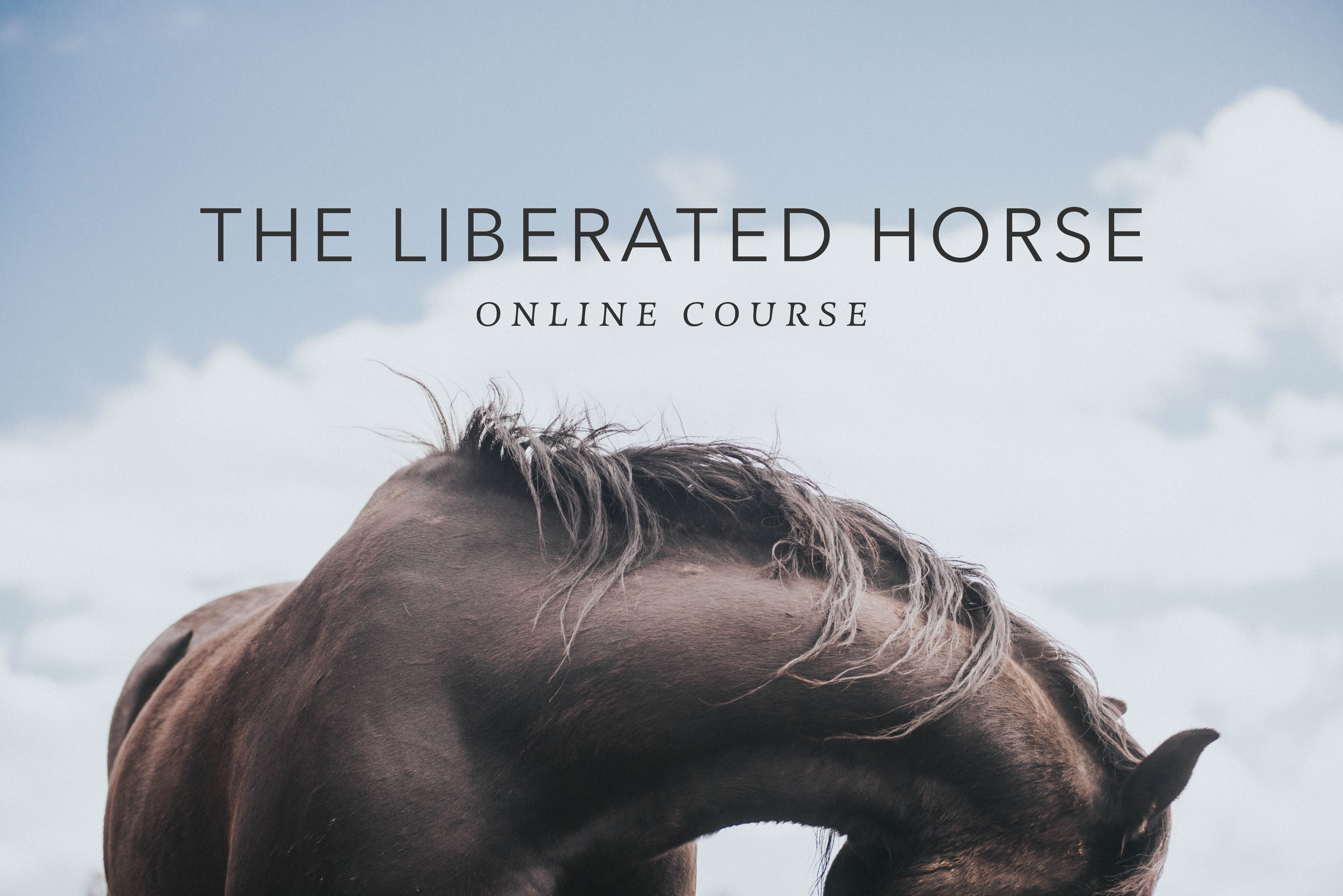 The Liberated Horse TITLE.jpg