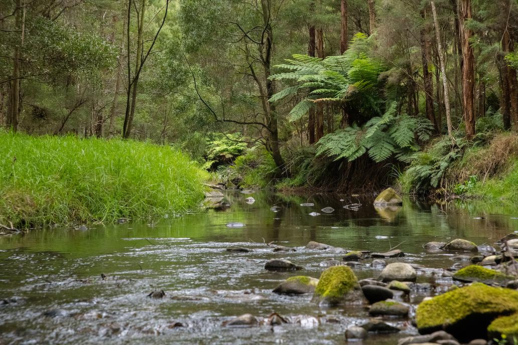 190187-freshwater-testing-painkalic-creek-222-email.jpg
