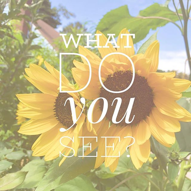 "Anxiety can be reduced if we slow down and take some time to be present. 🙏🏻 There are so many ways to do that! Just the other day I stopped to watch these beautiful sunflowers dancing in the wind. I stood there for about 60 seconds bathing in the bright yellow and green colors while the gentle breeze blew the flowers back and forth. A restorative moment for my soul! 🌻✨ Today take a moment to stop and ask yourself, ""What do I see?"" So often our eyes are fixed on our screens or unfocused on the world around us while our thoughts buzz around. But there is so much beauty to be seen and noticed! The blooming flowers, falling leaves, furry animals, kind faces, interesting architecture, unique walkways, and so much more. When you take a moment to notice something - really pause and admire it - it can do wonders for your mood. Try to notice one thing today that you haven't before in your usual travels! #zen #psychology #mindfulness #boston #citylife #present #slowdown #peaceful #therapy #inspiration #calm"