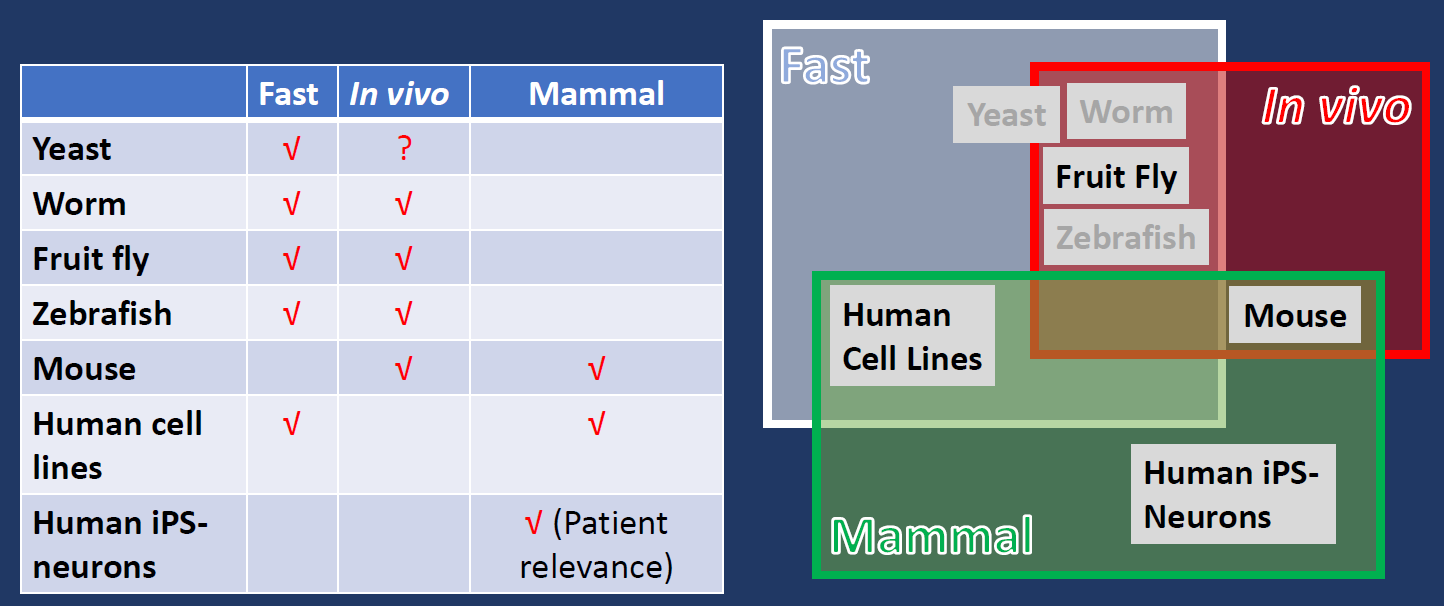 A combination of models systems ensures the quickness, in vivo testing, and patient-relevance.