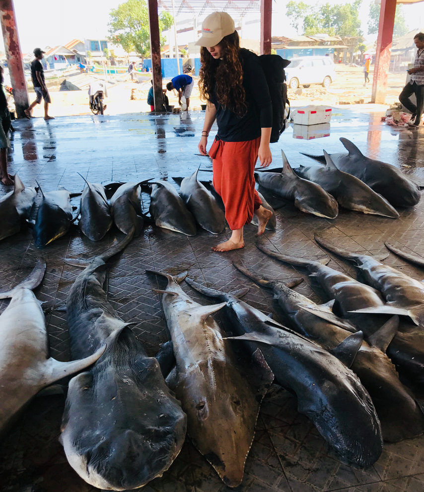Kristy Hillas at a shark fishing market with Project Hiu in Lombok, 2018