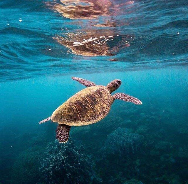 Guys we have a BIG announcement coming real soon! 🌏🐢 We have some exciting news, and some changes coming. We are so grateful for everyone who has supported Shark Education Australia 🦈, and while we are still going to focus heavily on shark conservation...we feel we need to also focus on other marine conservation issues, but we will go into more detail really soon! Can't wait to show you all what we've been working on to allow us to be able to create the next generation of ocean warriors...the 'blue generation' are coming! 📷: @danielthomasbrowne