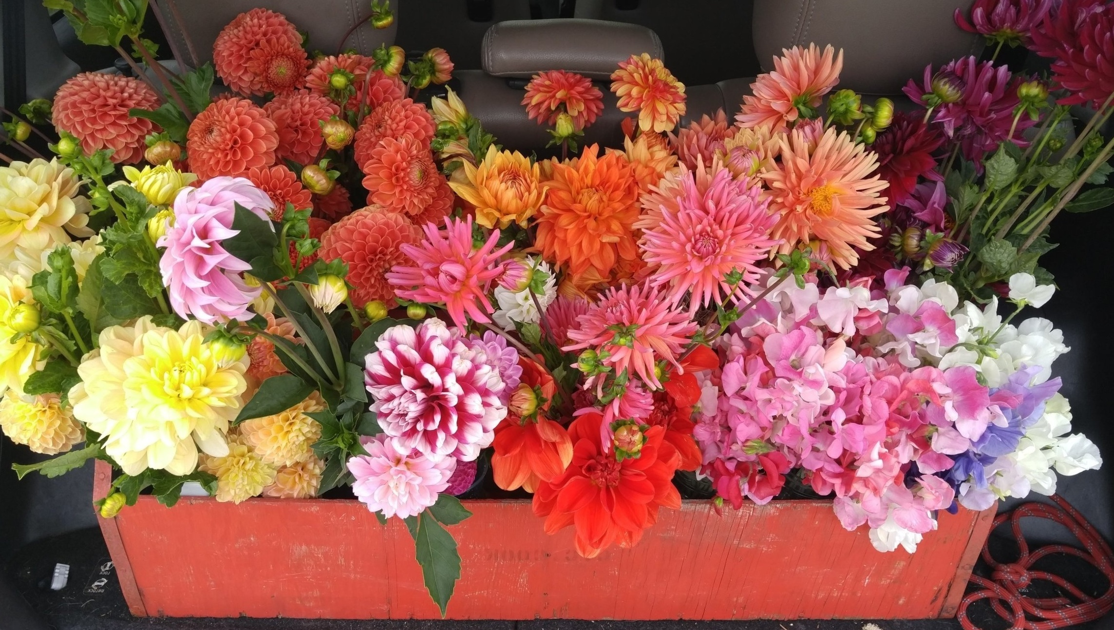 """DIY Bulk Flower Orders - We do not offer full service florist work at this time {but can refer you to many who do!} If you are planning a party or wedding, we sell flowers by the stem for bulk pricing, byob """"bring your own bucket"""" or with additional surcharge the farm can supply buckets."""