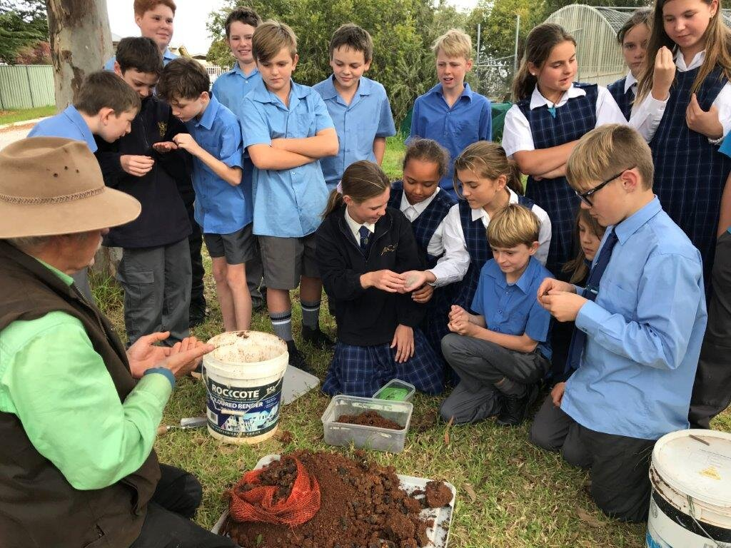 Students from Molong Central School in New South Wales digging up the cores to find  Bubas bison  have successfully bred
