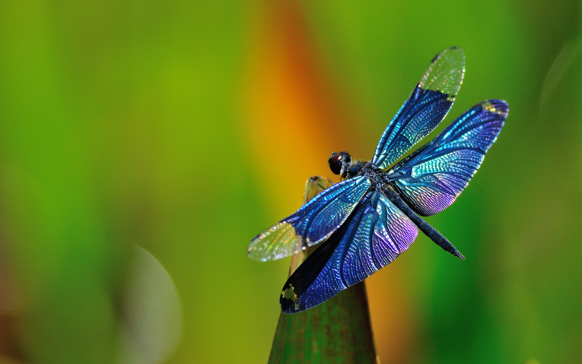 WHY THE DRAGONFLY? - The Dragonfly has a very special meaning to our family. After my father passed away, the dragonfly became symbolic of his presence. Everytime we would see a dragonfly we would think he was watching over us. A few years later, after doing some research on dragonflies and their symbolism, I couldn't believe my eyes as I read the below paragraph. I felt it captured the spirit of our children, specifically my son Jack and the journey he was facing with Autism.The dragonfly, in almost every part of the world, symbolizes change in the perspective of self realization. The metamorphic act of emergence from nymph to dragonfly strips away our beliefs of containment, our limitations, and our self doubt.The spirit of the dragonfly reminds us that everything is possible! We can achieve our dreams and our goals. We can learn to understand about ourselves, and our self belief.The dragonfly spirit is the keeper of our dreams, seeking out true potential and ability, giving us the capability to fulfill our dreams.