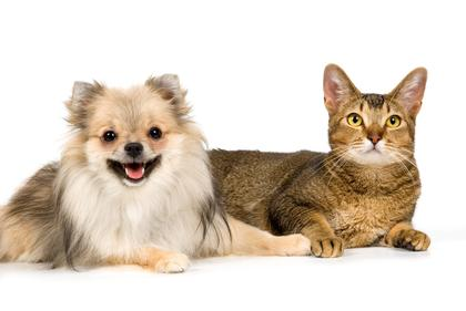 Wholefood Organic pet supplements - Our organic dog vitamins and organic cat vitamins will give your pet the supplements necessary to live long, healthy lives and combat diseases and pre-mature aging for optimum dog health and cat health. And your pets will love the taste!