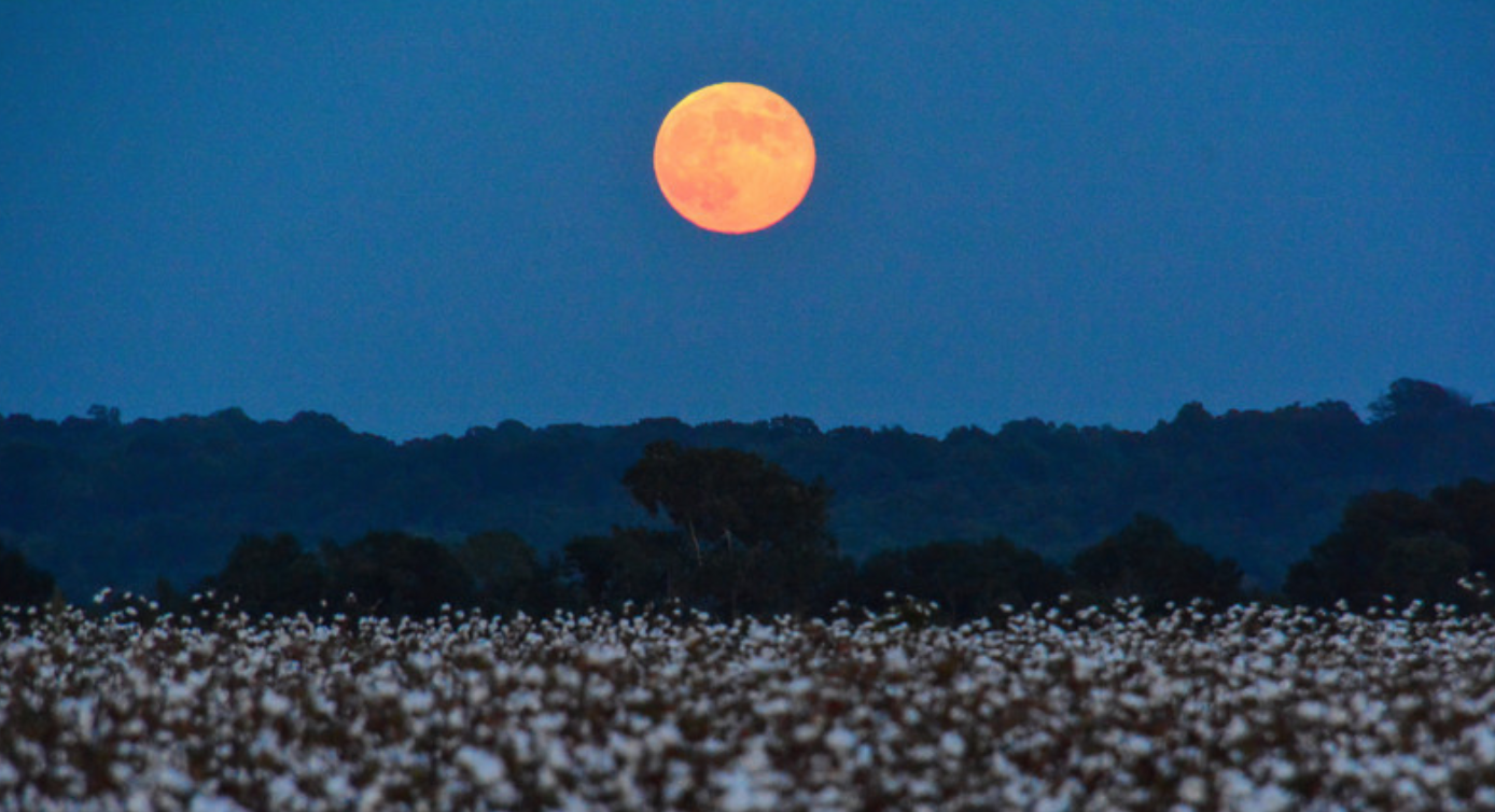 A Harvest Moon is the full moon closest to the autumnal equinox, traditionally when farmers would start gathering crops to prepare for the winter months. -  medium.com/ted-hunt
