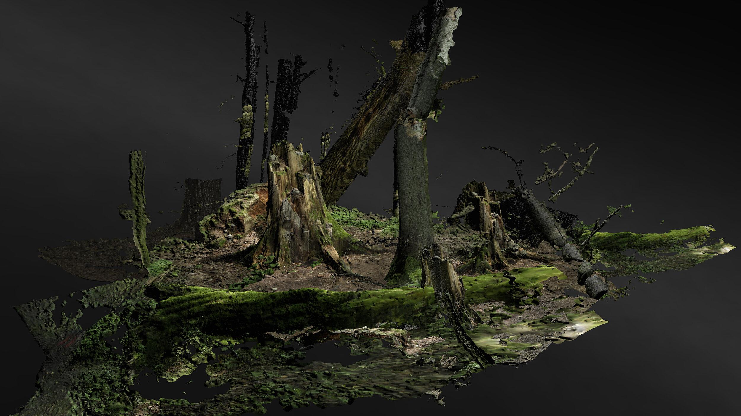 Forest on Location  (2019) Broersen & Lukacs