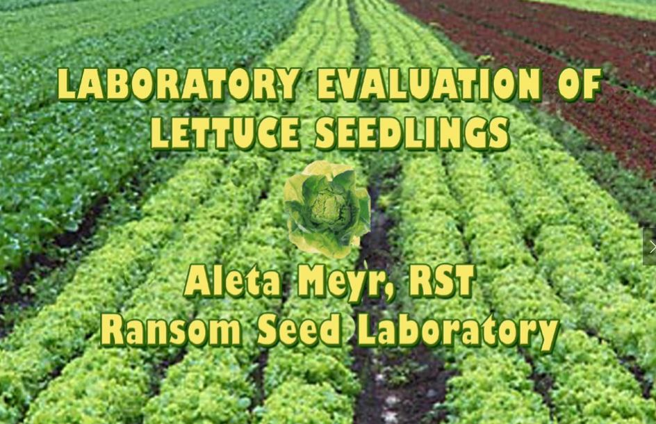 Lettuce Necrosis - SCST AOSA Symposium Presentation from 2003