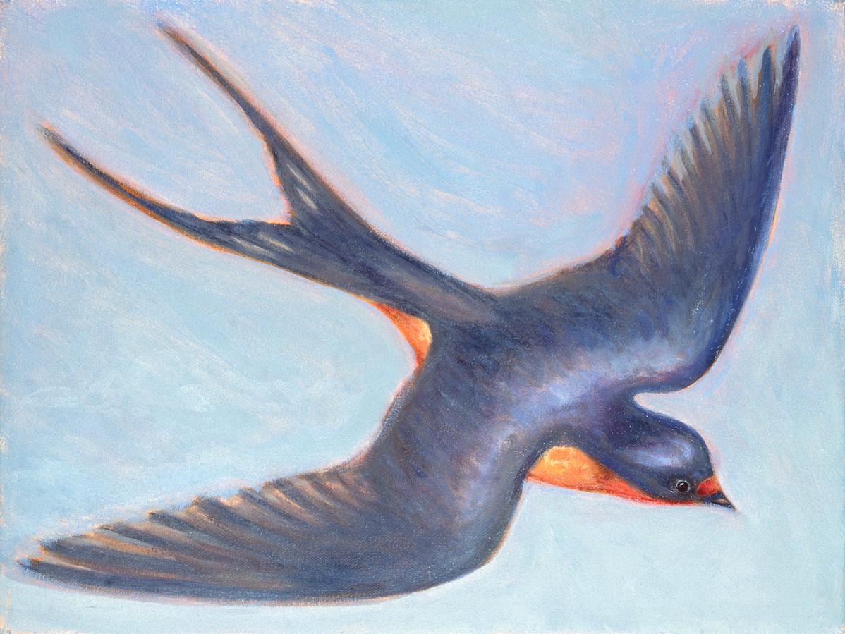 "Barn Swallow   12"" x 16"" Oil on Canvas"