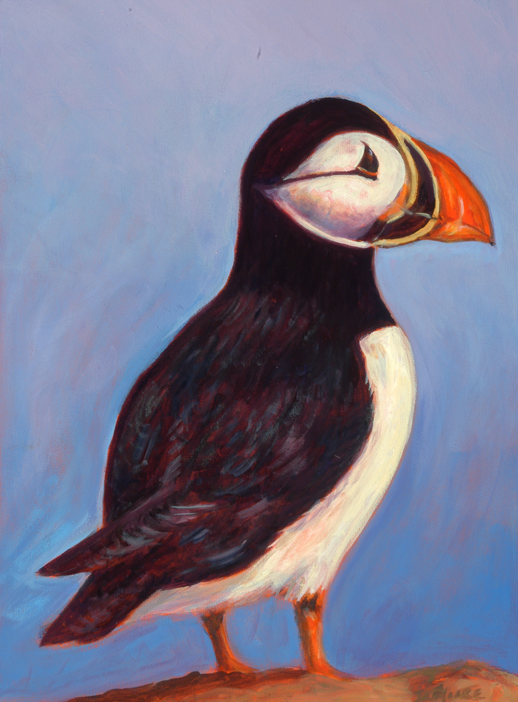 """Puffin   16"""" x 12"""" Oil on Canvas"""