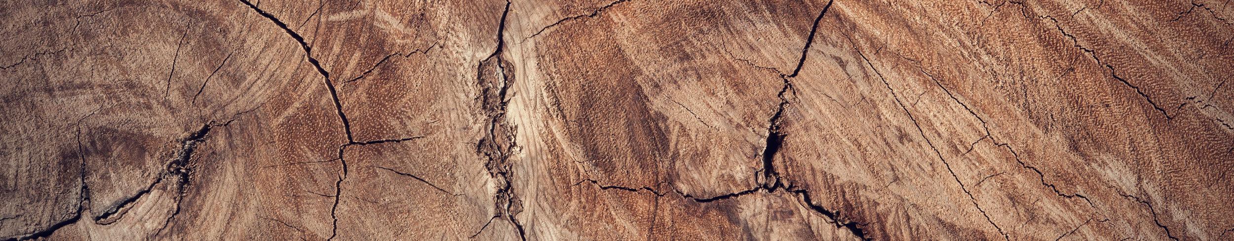 wood_cropped.jpg