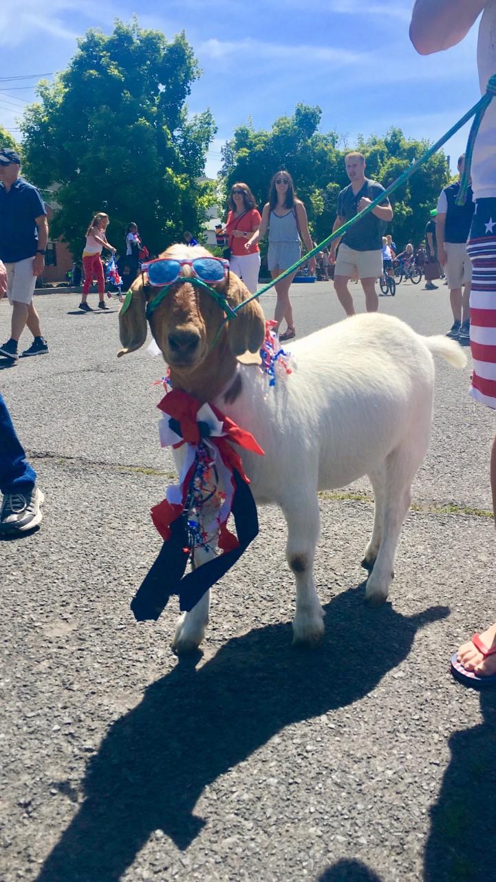 Bend Pet Parade, July 4th 2019, Photo Faddis Real Estate