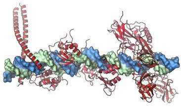 Enhanceosome_vertical_edited.jpg