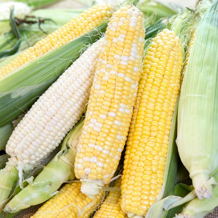 Sweet Corn-variety.jpg