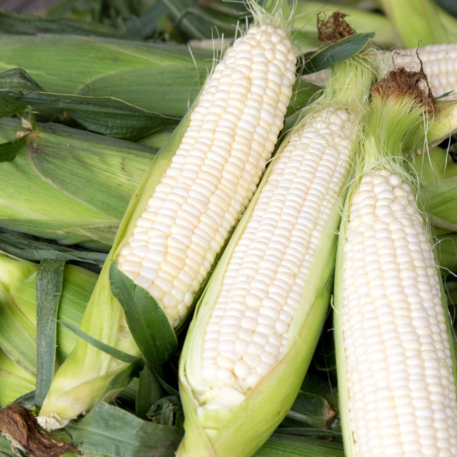 White Swt Corn.jpg