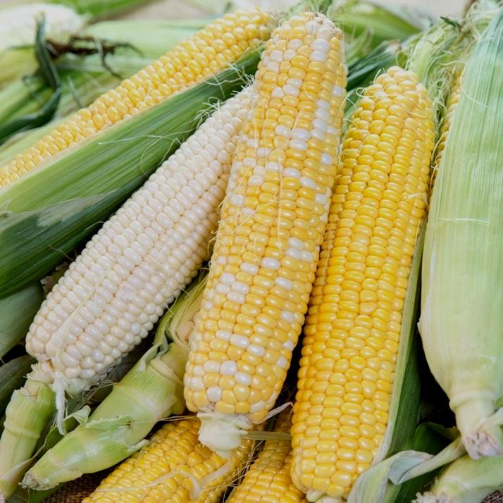Sweet+Corn-variety.jpg