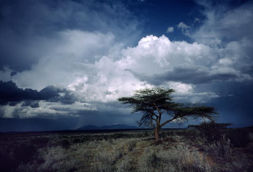 Samburu.jpg