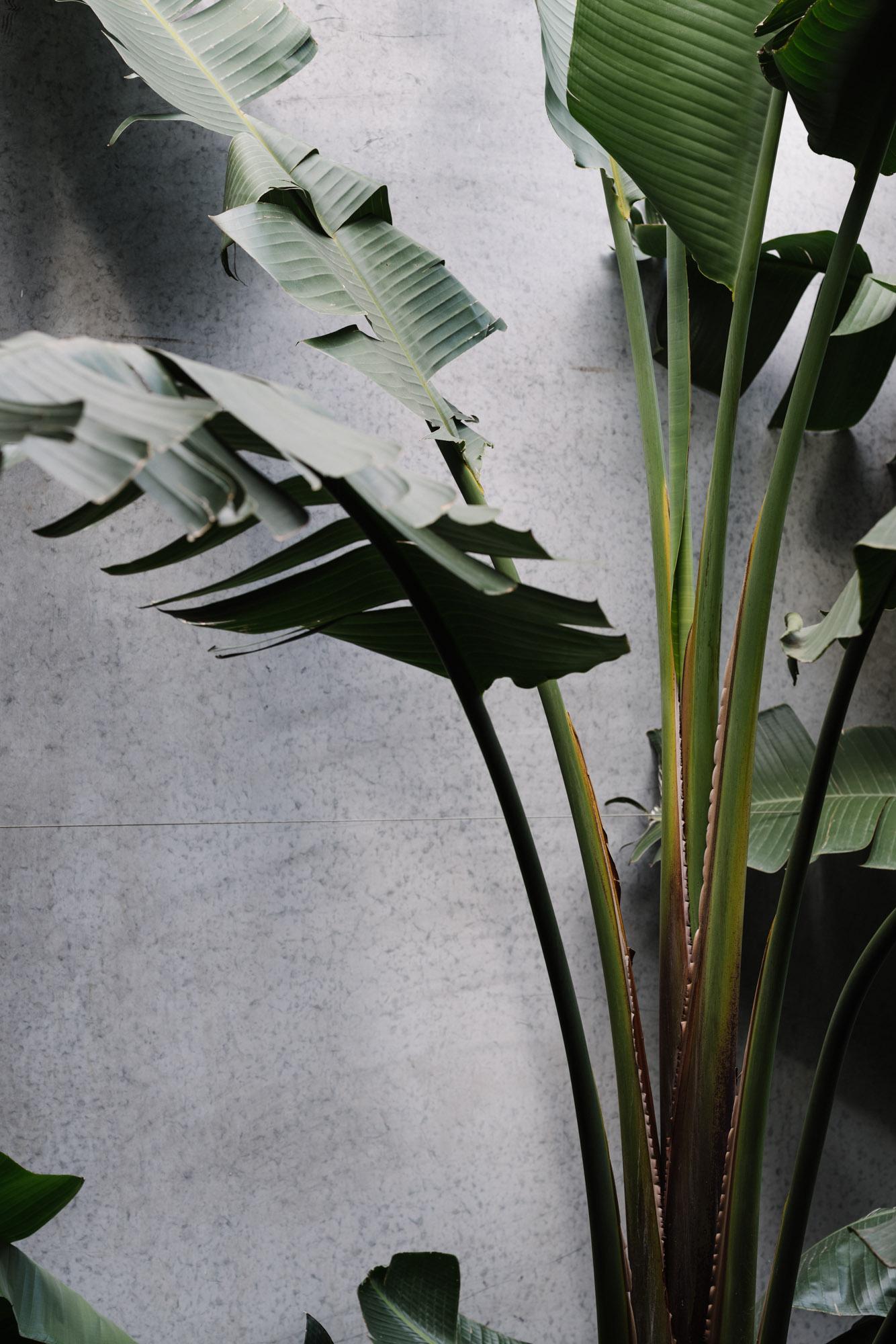 Ayus Botanical_low res-147.jpg