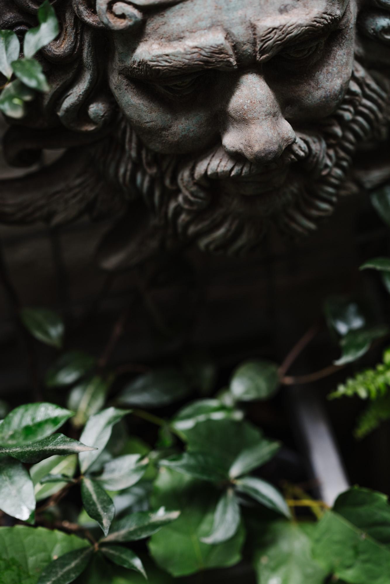 Ayus Botanical_low res-1.jpg