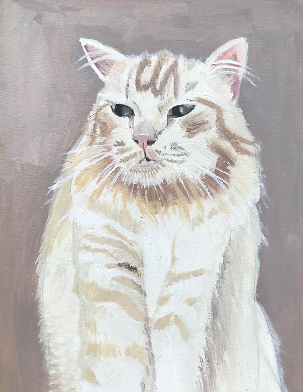 chester cat .jpg