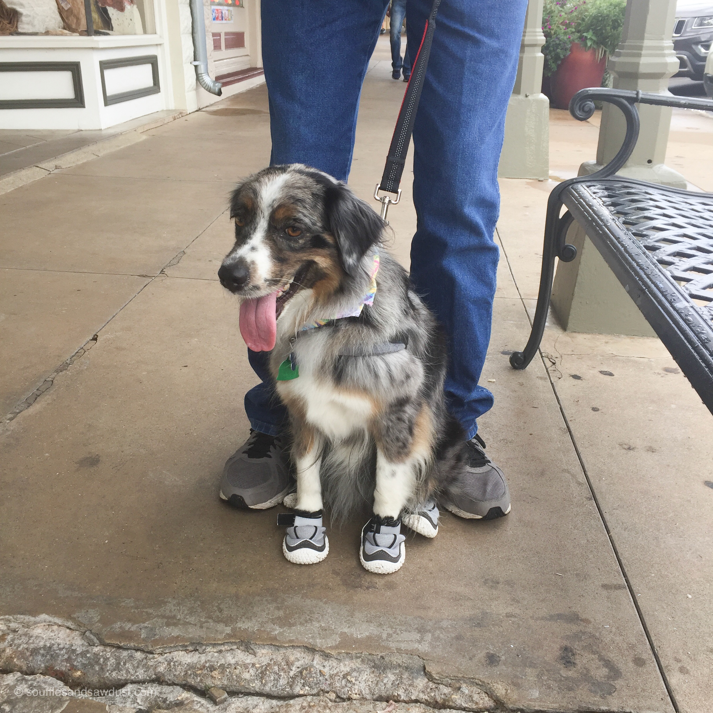 Dog with sneakers in Fredericksburg, Texas, from the blog, SoufflesandSawdust.com