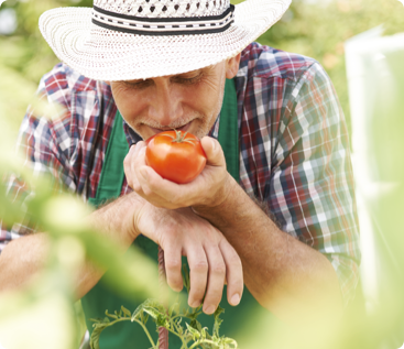 Seguridad alimentaria - Rastrea en cuestión de segundos el origen, recorrido y destino de cada producto.