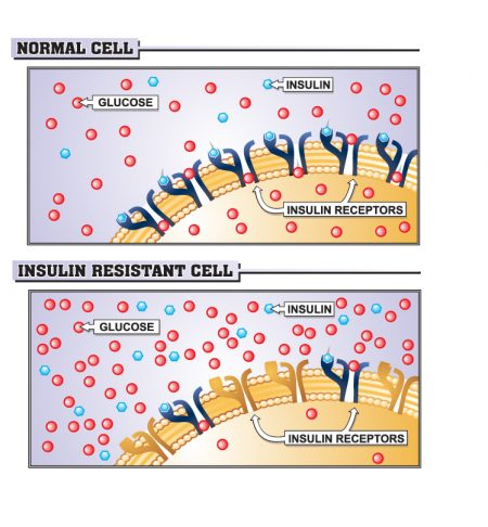 insulin-cell-Converted-450x486.jpg