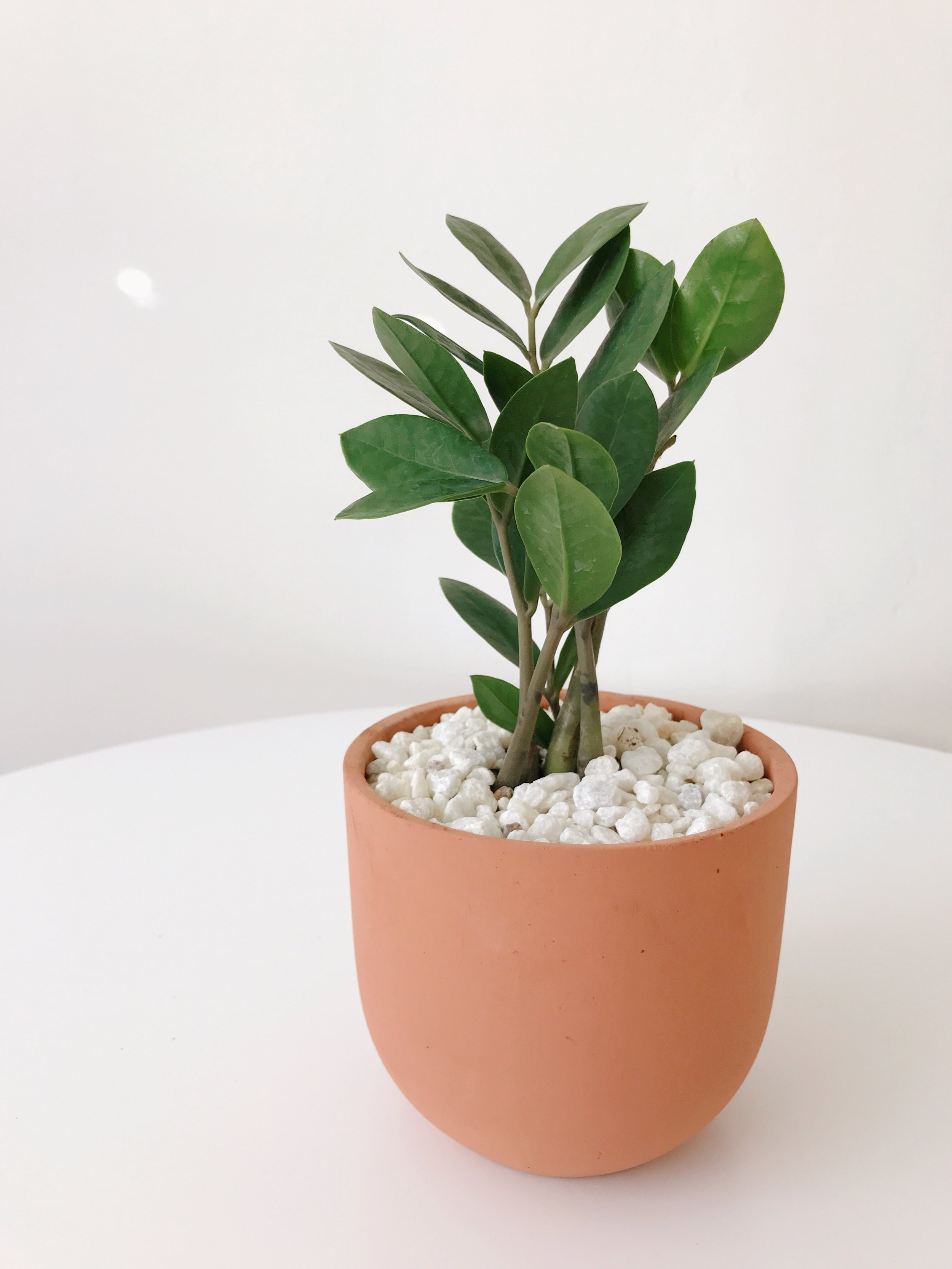Plant and pot from  The Sill  >  Get 15% off ☺︎