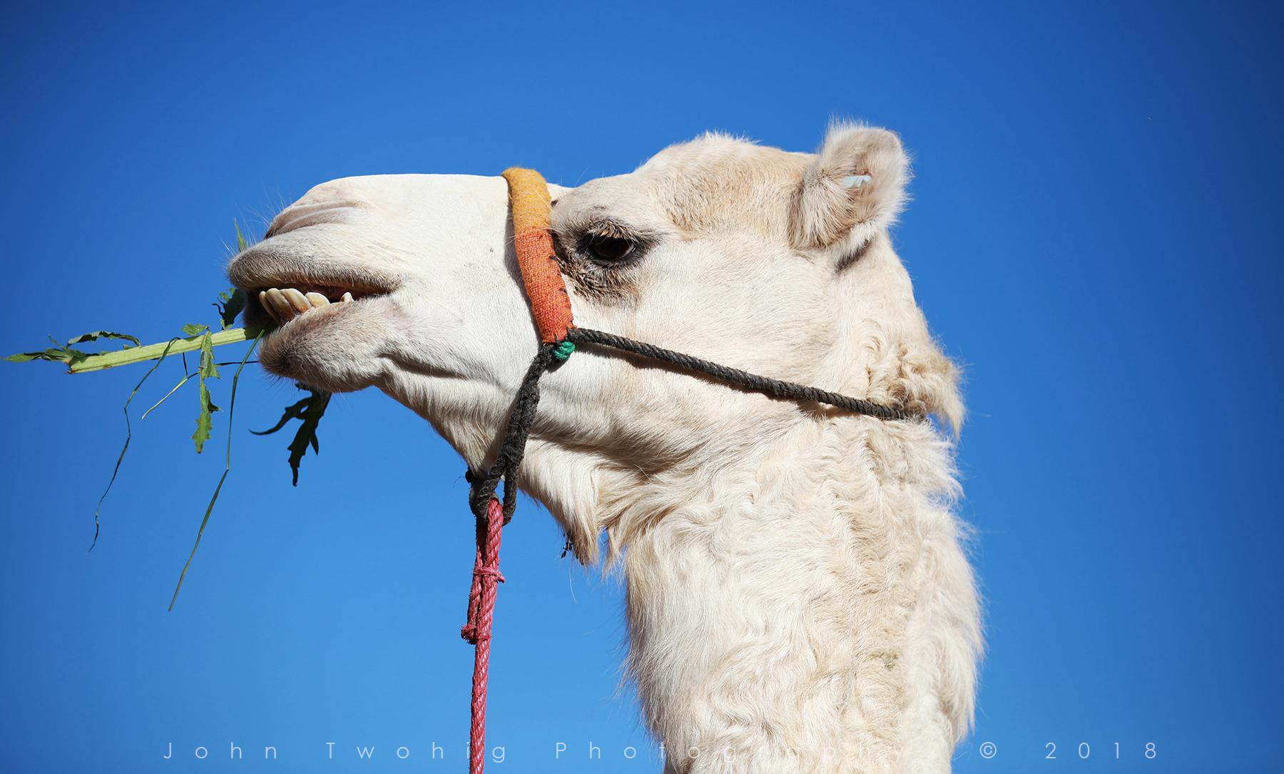 Web Maroc IMG_0542.jpg