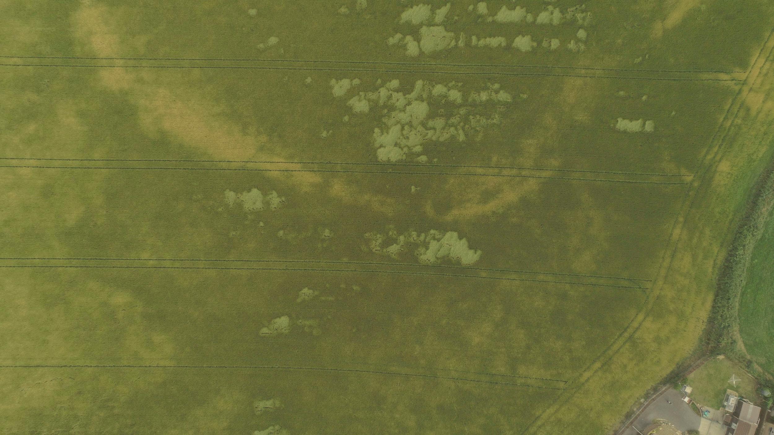 Field near the Border.