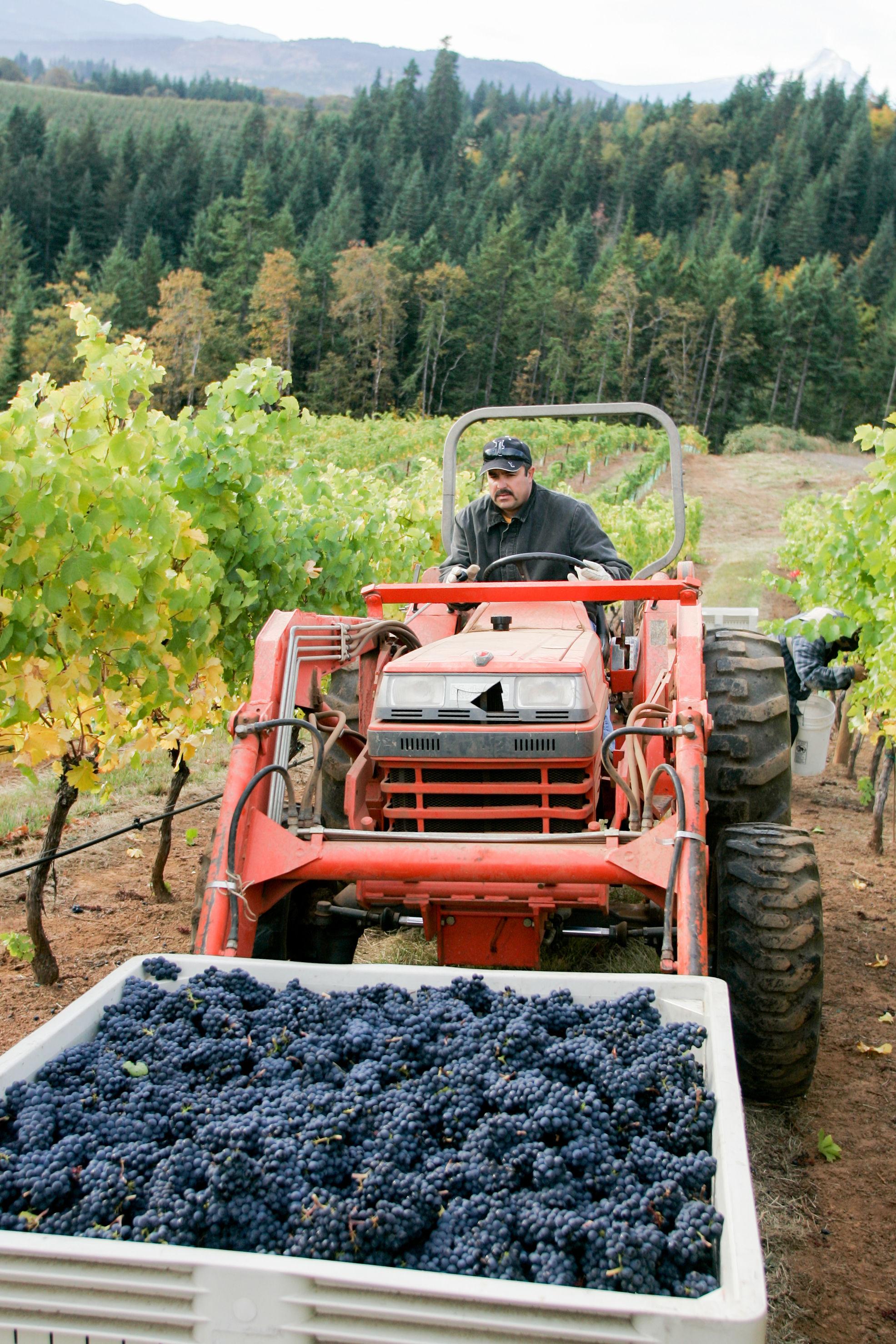 Image: Cellar & Vineyard Manager, Irineo Magana